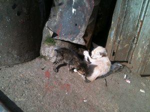 Philippines Street Cats
