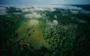 Congo Nouabalé-Ndoki Park