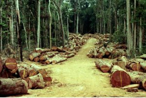 Congo logging road