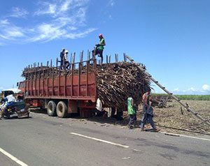 Trucks loaded with sugar cane.